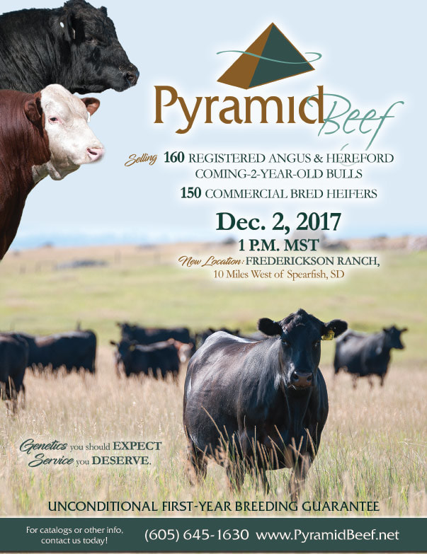 Pyramid Beef We-Prints Plus Newspaper Insert by Any Door Marketing