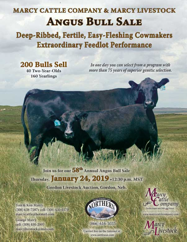 Marcy Cattle Company We-Prints Plus Newspaper Insert Printed by Any Door Marketing